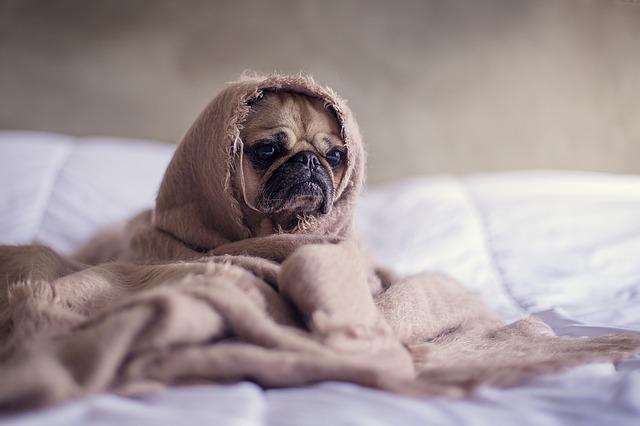 pes pod dekou