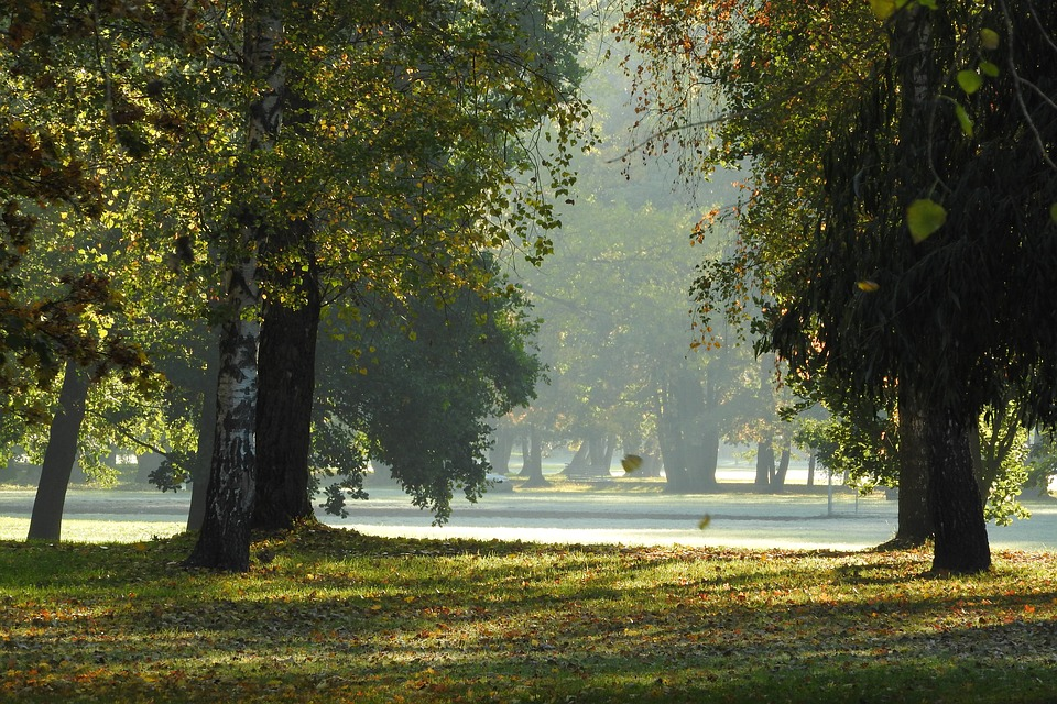 the-trees-in-the-fall-2052255_960_720